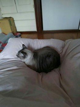 猫0292.jpg